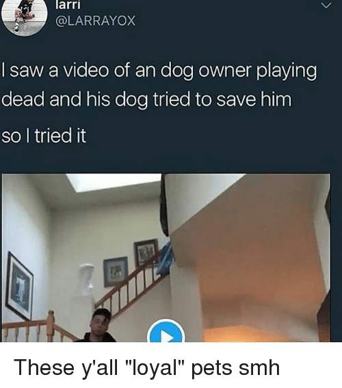 "Memes, Saw, and Smh: arri  @LARRAYOX  I saw a video of an dog owner playing  dead and his dog tried to save him  so l tried it These y'all ""loyal"" pets smh"