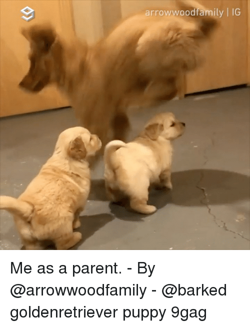 Me As A Parent: arrowwoodfamily | IG Me as a parent. - By @arrowwoodfamily - @barked goldenretriever puppy 9gag