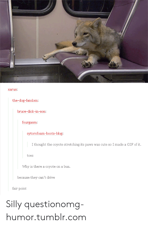 Omg, Tumblr, and Blog: arus.  the-dog-fandom  ruce-dick-in-son  fourgasm:  sytorofoam-boots-blog  thoaght the cyoe sr  me aFf  toes  Why is there a coyote on a bus.  because they can't drive  fair point Silly questionomg-humor.tumblr.com