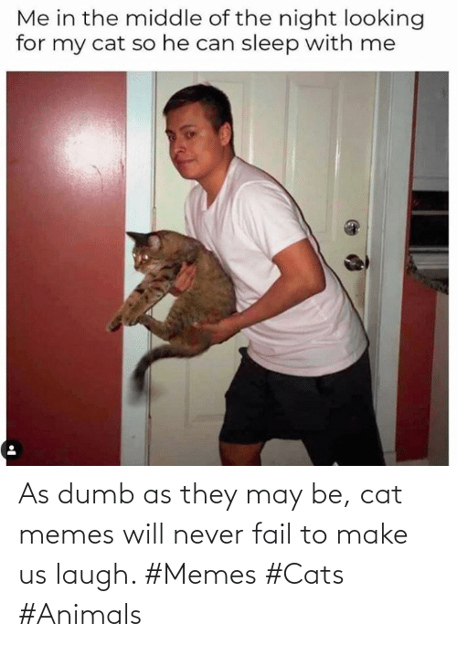 Dumb: As dumb as they may be, cat memes will never fail to make us laugh. #Memes #Cats #Animals