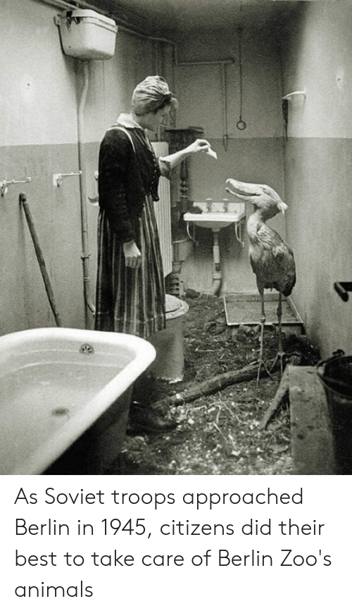Animals, Best, and Soviet: As Soviet troops approached Berlin in 1945, citizens did their best to take care of Berlin Zoo's animals