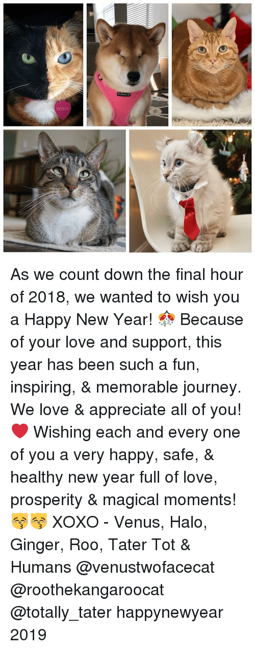 Halo, Journey, and Love: As we count down the final hour of 2018, we wanted to wish you a Happy New Year! 🎊 Because of your love and support, this year has been such a fun, inspiring, & memorable journey. We love & appreciate all of you! ❤️ Wishing each and every one of you a very happy, safe, & healthy new year full of love, prosperity & magical moments! 😽😽 XOXO - Venus, Halo, Ginger, Roo, Tater Tot & Humans @venustwofacecat @roothekangaroocat @totally_tater happynewyear 2019