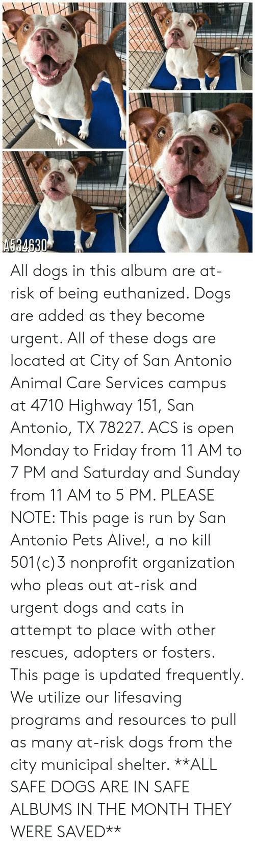 Alive, Cats, and Dogs: AS34630 All dogs in this album are at-risk of being euthanized.  Dogs are added as they become urgent.  All of these dogs are located at City of San Antonio Animal Care Services campus at 4710 Highway 151, San Antonio, TX 78227. ACS is open Monday to Friday from 11 AM to 7 PM and Saturday and Sunday from 11 AM to 5 PM.   PLEASE NOTE: This page is run by San Antonio Pets Alive!, a no kill 501(c)3 nonprofit organization who pleas out at-risk and urgent dogs and cats in attempt to place with other rescues, adopters or fosters.   This page is updated frequently.  We utilize our lifesaving programs and resources to pull as many at-risk dogs from the city municipal shelter. **ALL SAFE DOGS ARE IN SAFE ALBUMS IN THE MONTH THEY WERE SAVED**