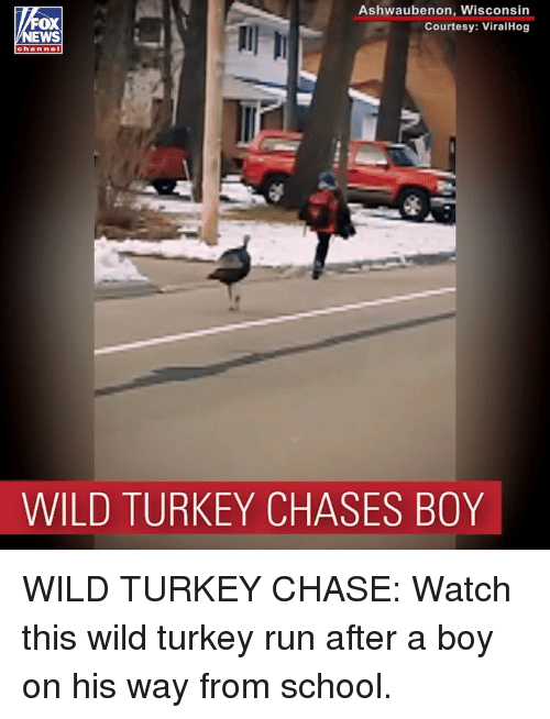 Memes, Run, and School: Ashwaubenon, Wisconsin  Courtesy: ViralHog  OX  channel  WILD TURKEY CHASES BOY WILD TURKEY CHASE: Watch this wild turkey run after a boy on his way from school.