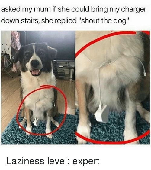 """Funny, Laziness, and Dog: asked my mum if she could bring my charger  down stairs, she replied """"shout the dog"""" Laziness level: expert"""