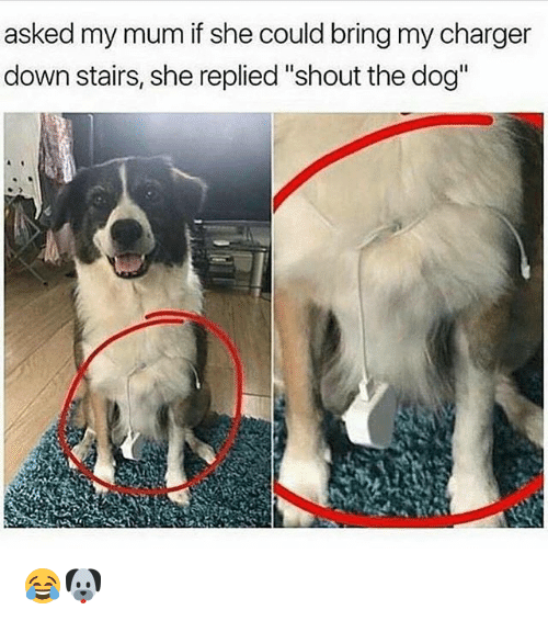 "Memes, 🤖, and Dog: asked my mum if she could bring my charger  down stairs, she replied""shout the dog"" 😂🐶"