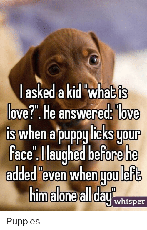 "Being Alone, Love, and Puppies: askedakid what is  ove?"". He answered: love  is when a puppy licks uour  ace laughed before he  added even when uou left  m alone all dayhisner Puppies"
