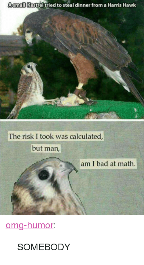 "Risk I Took Was Calculated But Man Am I Bad At Math: Asmall Kestrel tried to steal dinner from a Harris Hawk  The risk I took was calculated  but man  am I bad at math <p><a href=""http://omg-humor.com/post/160496854497/somebody"" class=""tumblr_blog"">omg-humor</a>:</p>  <blockquote><p>SOMEBODY</p></blockquote>"
