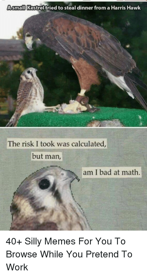 Bad, Memes, and Work: Asmall Kestrel tried to steal dinner from a Harris Hawk  The risk I took was calculated  but man,  am I bad at math. 40+ Silly Memes For You To Browse While You Pretend To Work