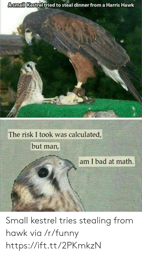 Risk I Took Was Calculated But Man Am I Bad At Math: Asmall Kestreltried to steal dinner from a Harris Hawk  The risk I took was calculated  but man,  am I bad at math. Small kestrel tries stealing from hawk via /r/funny https://ift.tt/2PKmkzN