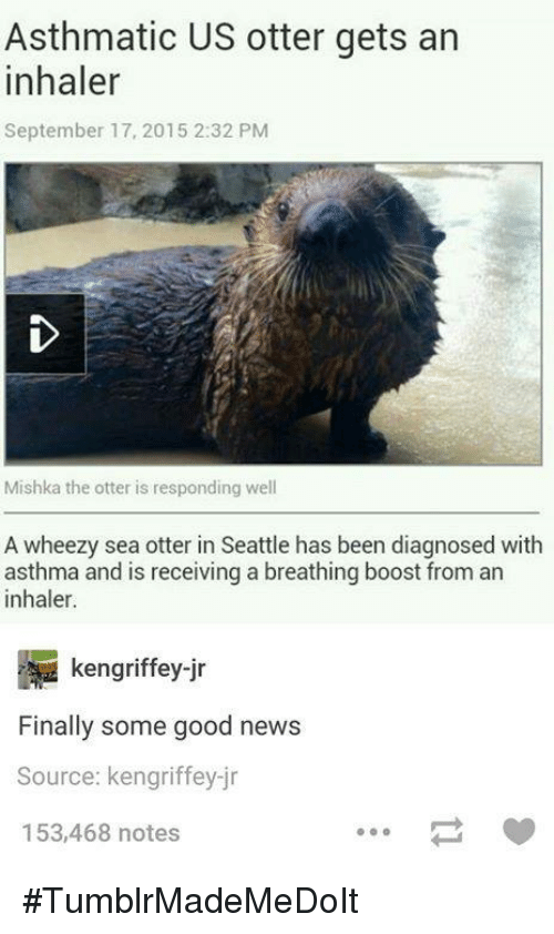 Dank, 🤖, and Otter: Asthmatic US otter gets an  inhaler  September 17, 2015 2:32 PM  Mishka the otter is responding well  A wheezy sea otter in Seattle has been diagnosed with  asthma and is receiving a breathing boost from an  inhaler.  kengriffey ir  Finally some good news  Source: kengriffey-jr  153,468 notes #TumblrMadeMeDoIt