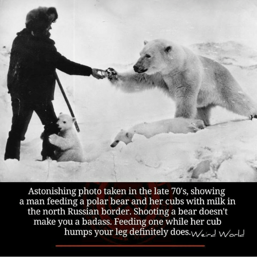 Definitely, Memes, and Taken: Astonishing photo taken in the late 70's, showing  a man feeding a polar bear and her cubs with milk in  the north Russían border. Shooting a bear doesn't  make you a badass. Feeding one while her cub  humps your leg definitely does.Weird wWorl