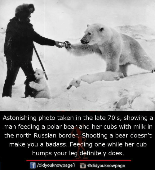 Definitely, Memes, and Taken: Astonishing photo taken in the late 70's, showing a  man feeding a polar bear and her cubs with milk in  the north Russian border. Shooting a bear doesn't  make you a badass. Feeding one while her cub  humps your leg definitely does.  /didyouknowpagel@didyouknowpage