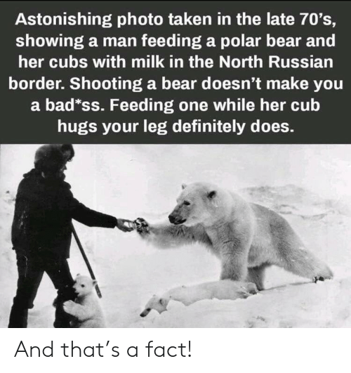 Bad, Definitely, and Taken: Astonishing photo taken in the late 70's,  showing a man feeding a polar bear and  her cubs with milk in the North Russian  border. Shooting a bear doesn't make you  a bad*ss. Feeding one while her cub  hugs your leg definitely does. And that's a fact!