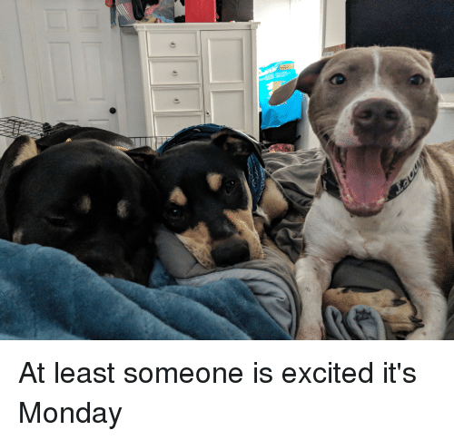 Monday, Excited, and Someone: At least someone is excited it's Monday