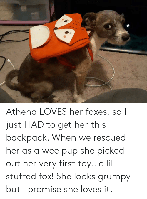 Wee, Athena, and Pup: Athena LOVES her foxes, so I just HAD to get her this backpack. When we rescued her as a wee pup she picked out her very first toy.. a lil stuffed fox! She looks grumpy but I promise she loves it.