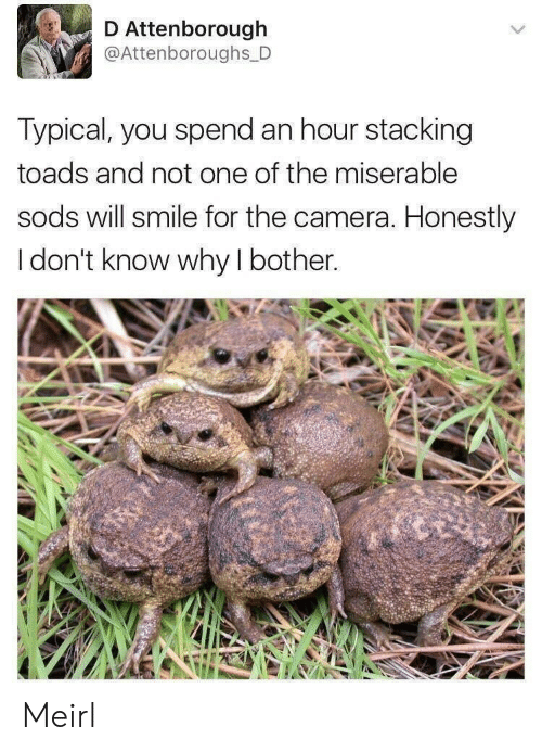 Camera, Smile, and MeIRL: Attenborough  @Attenboroughs D  Typical, you spend an hour stacking  toads and not one of the miserable  sods will smile for the camera. Honestly  I don't know why I bother. Meirl