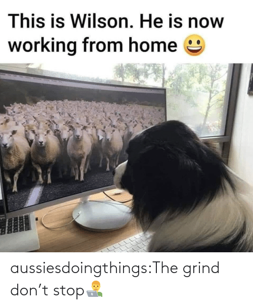 don: aussiesdoingthings:The grind don't stop👨💻