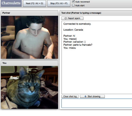 Canada, Chat, and Connected: Auto reconnect  Auto start  Chatroulette  Next (F2 / Alt +O)Stop (F3/Alt + P)  Partner  Text chat (Partner is typing a message)  0 Report spam  Connected to somebody.  Location: Canada  Partner: hi  You: meow]  Partner: canadien :)  Partner: parle tu francais?  You: miaou  You  Clear chat log  ◆ Start drawing