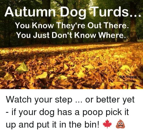 Autumn Dog Turds: Autumn Dog Turds  You Know They're Out There.  You Just Don't Know Where. Watch your step ... or better yet - if your dog has a poop  pick it up and put it in the bin!  🍁 💩