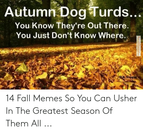 Autumn Dog Turds: Autumn Dog Turds...  You Know They're Out There.  You Just Don't Know Where.  Funnulle  emea 14 Fall Memes So You Can Usher In The Greatest Season Of Them All ...