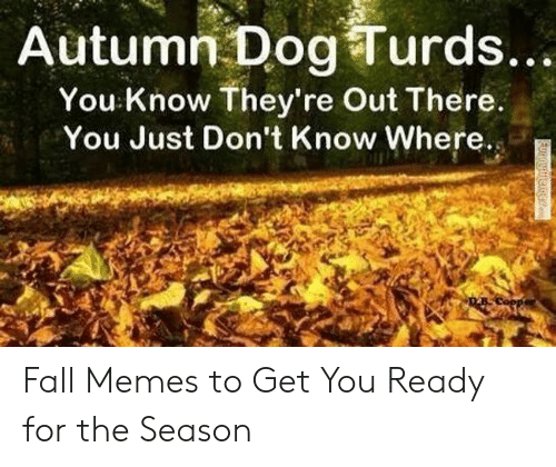 Fall, Memes, and Dog: Autumn Dog Turds...  You Know They're Out There.  You Just Don't Know Where.  Furnymemer Fall Memes to Get You Ready for the Season