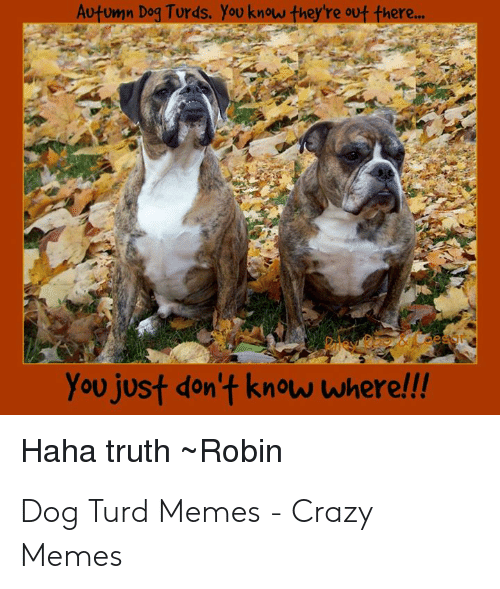 Autumn Dog Turds: Autumn Dog Turds. You know they're out there...  You just don't know where!!!  Haha truth Robin