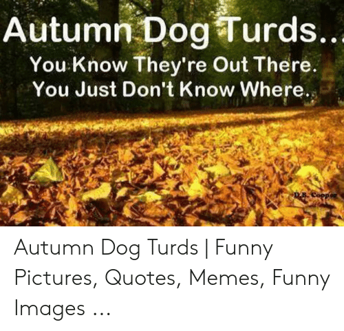 Funny, Memes, and Images: Autumn Dog Turds.  You: Know They're Out There  You Just Don't Know Where.s Autumn Dog Turds | Funny Pictures, Quotes, Memes, Funny Images ...