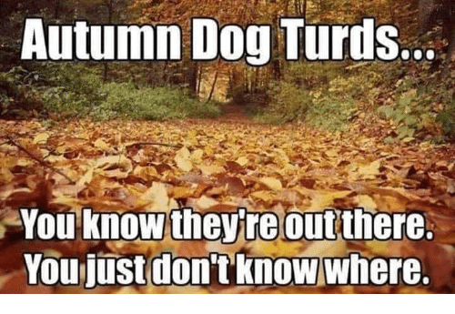Memes, 🤖, and Dog: Autumn Dog Turds..  You'knowtheyreout there  Youjustdontknowwhere.