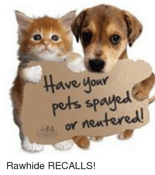 Spay your pet