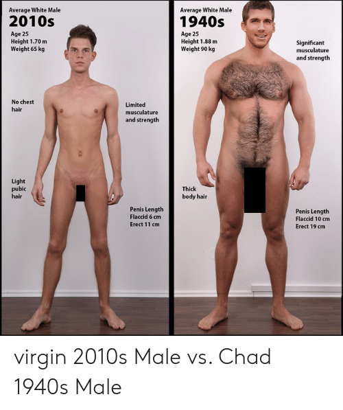 How large is average male penis