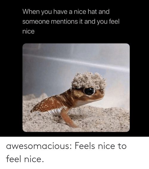 Nice: awesomacious:  Feels nice to feel nice.