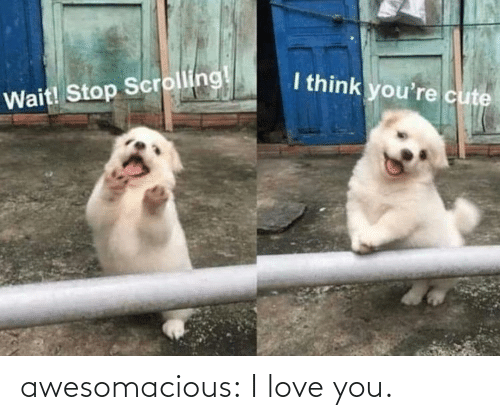 Love, Tumblr, and I Love You: awesomacious:  I love you.
