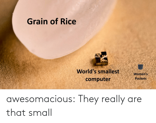 small: awesomacious:  They really are that small