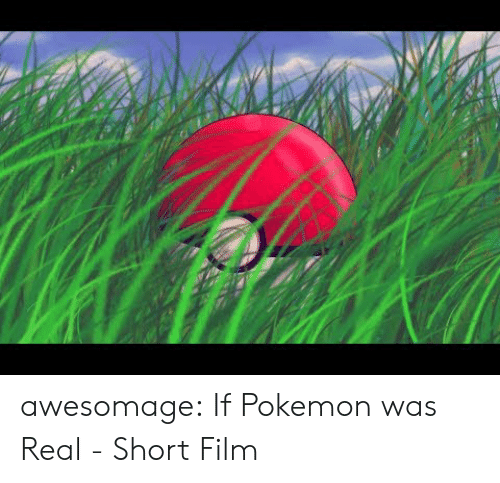 Pokemon, Tumblr, and Blog: awesomage:  If Pokemon was Real - Short Film