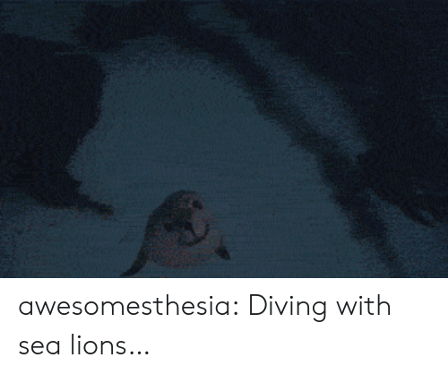 sea lions: awesomesthesia:  Diving with sea lions…