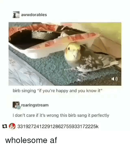 """Af, Singing, and Sang: awwdorables  birb singing """"if you're happy and you know it""""  roaringstream  I don't care if it's wrong this birb sang it perfectly  L1 33192724122912862755933172225k wholesome af"""