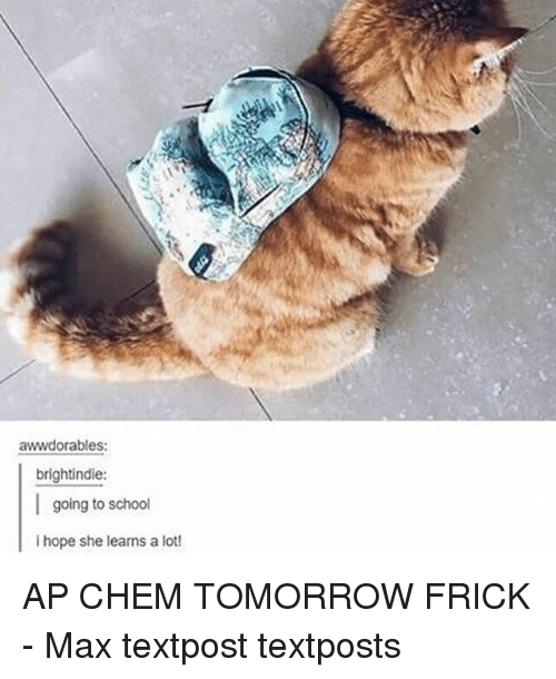 Frickly: awwdorables:  brightindie:  I going to school  i hope she learns a lot! AP CHEM TOMORROW FRICK - Max textpost textposts