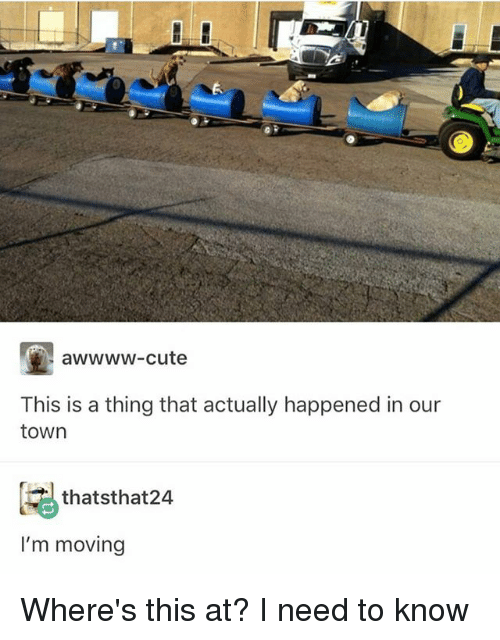 Cute, Memes, and 🤖: awwww-cute  This is a thing that actually happened in our  town  thatsthat24  I'm moving Where's this at? I need to know
