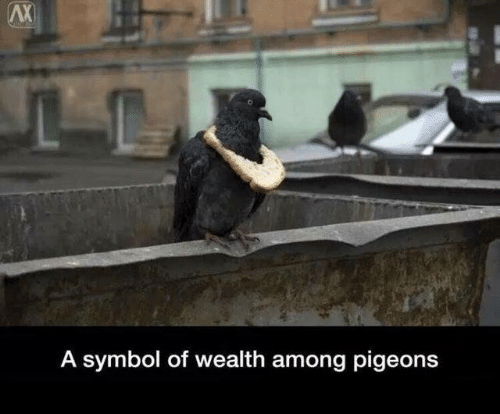 Dank, 🤖, and Symbol: AX  A symbol of wealth among pigeons