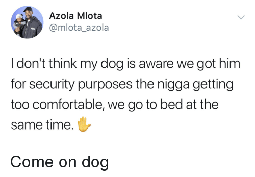 Comfortable, Time, and Got: Azola Mlota  @mlota_azola  Idon't think my dog is aware we got him  for security purposes the nigga getting  too comfortable, we go to bed at the  same time. Come on dog