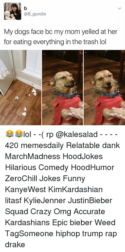 Dog Faces: @B gundis  My dogs face bc my mom yelled at her  for eating everything in the trash lol 😂😂lol - -( rp @kalesalad - - - - 420 memesdaily Relatable dank MarchMadness HoodJokes Hilarious Comedy HoodHumor ZeroChill Jokes Funny KanyeWest KimKardashian litasf KylieJenner JustinBieber Squad Crazy Omg Accurate Kardashians Epic bieber Weed TagSomeone hiphop trump rap drake
