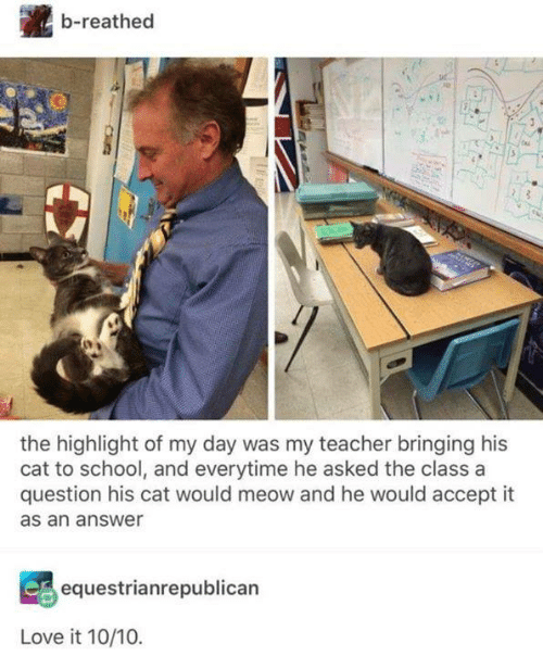Love, Memes, and School: b-reathed  e.  the highlight of my day was my teacher bringing his  cat to school, and everytime he asked the class a  question his cat would meow and he would accept it  as an answer  equestrianrepublican  Love it 10/10.