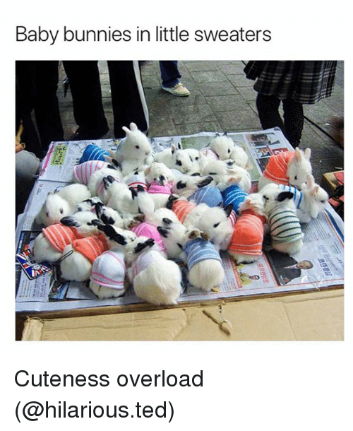 Bunnies, Funny, and Ted: Baby bunnies in little sweaters Cuteness overload (@hilarious.ted)