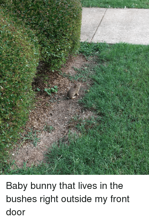 Baby, Bunny, and Door: Baby bunny that lives in the bushes right outside my front door