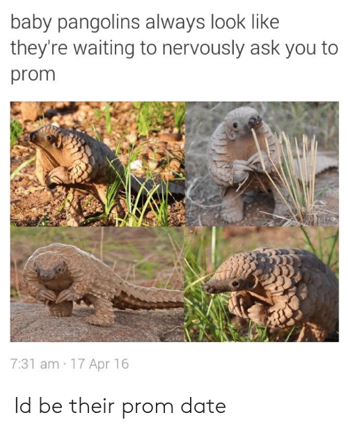 Date, Waiting..., and Baby: baby pangolins always look like  they're waiting to nervously ask you to  prom  7:31 am 17 Apr 16 Id be their prom date