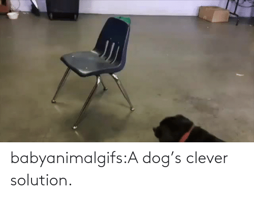 Dogs: babyanimalgifs:A dog's clever solution.