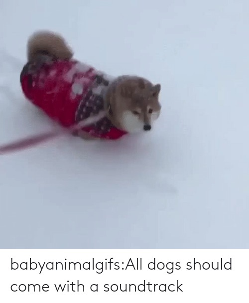 Should: babyanimalgifs:All dogs should come with a soundtrack