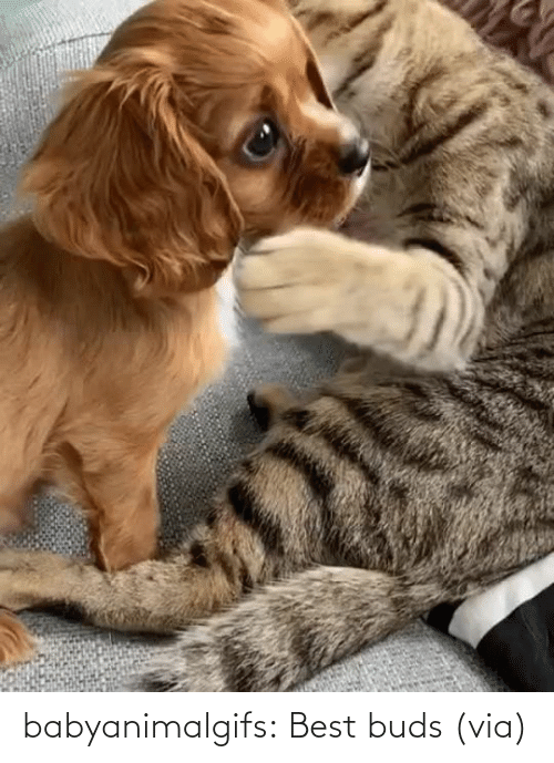 Best: babyanimalgifs:  Best buds (via)