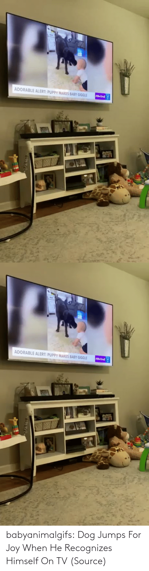 When He: babyanimalgifs:  Dog Jumps For Joy When He Recognizes Himself On TV (Source)